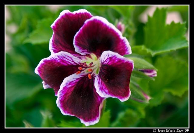 plantas flores varias